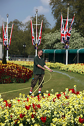 21 April 2011. London, England..Royal Parks gardeners work overtime to ensure the best flowers outside Buckingham Palace in the run up to Catherine Middleton's marriage to Prince William..Photo; Charlie Varley.