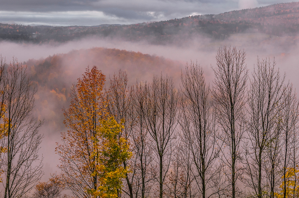 Late fall view of a few fall color trees and bare trees, with misty mountains background, Peacham, VT