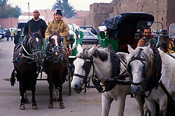 Caleche horses and owners, Marrakech, Morocco.