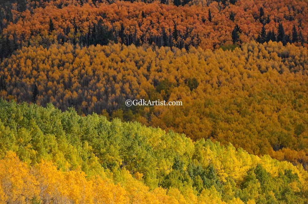 Changing of the Seasons: Aspens at the Santa Fe Ski Basin in November, 2010