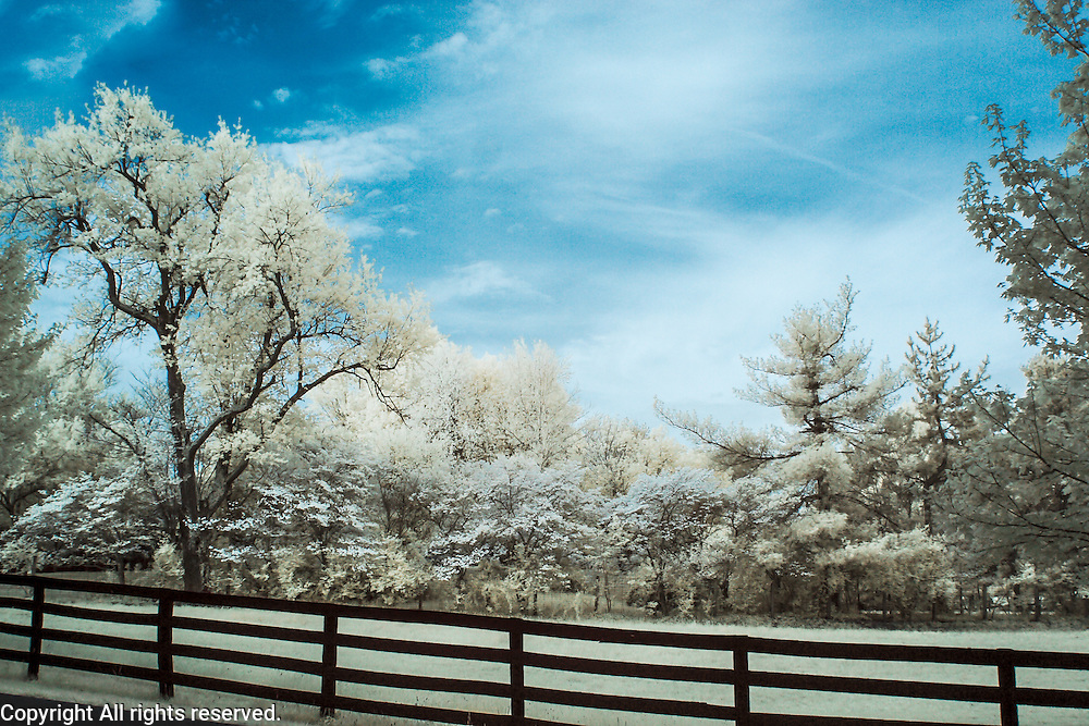 Infrared (IR) image - This is a scene photographed off of a rural Kentucky road not far from my house in Lexington.  This processing technique is used with some frequency by photographers on color digital IR images because the blue sky makes it look a bit closer to reality as we see it yet the foliage makes it clear that it is not a standard color photograph.  The image started with the regular brown/blue combination from the camera but the blue and red channels were inverted in Photoshop.  <br />