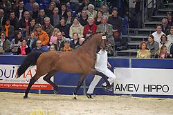 KWPN Hengstenkeuring - 's Hertogenbosch 2005<br /> Photo © Hippo Foto