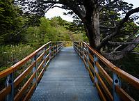 NATIONAL PARK LOS GLACIARES, ARGENTINA - CIRCA FEBRUARY 2019: Walkway path at the National Park los Glaciares in Argentina.