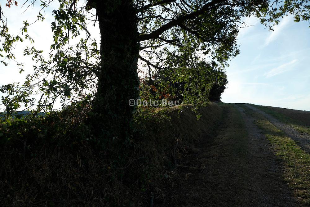 landscape with track Languedoc Aude France