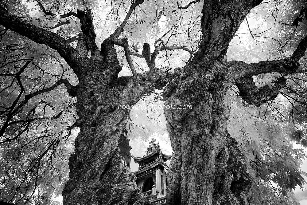 Vietnam Images-Fine art-Infrared-nature-Ninh Binh hoàng thế nhiệm
