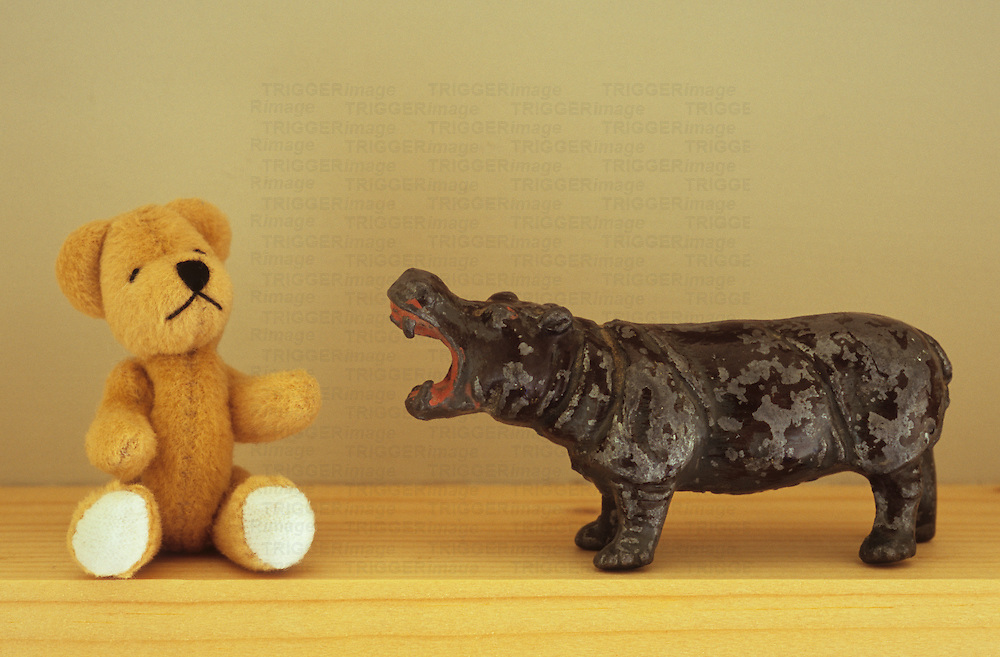 Teddy threatened by hippo