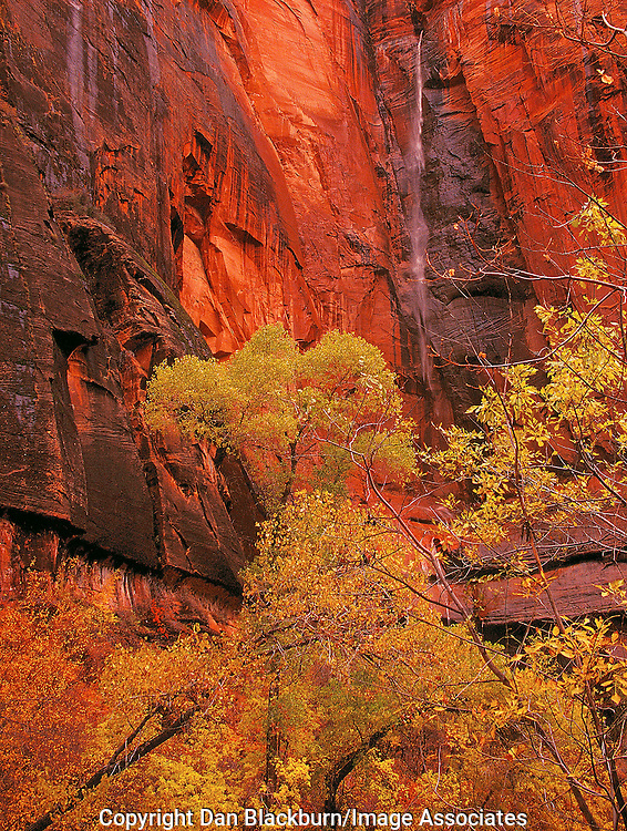 Waterfall & Fall Color in Canyon in Zion National Park Utah