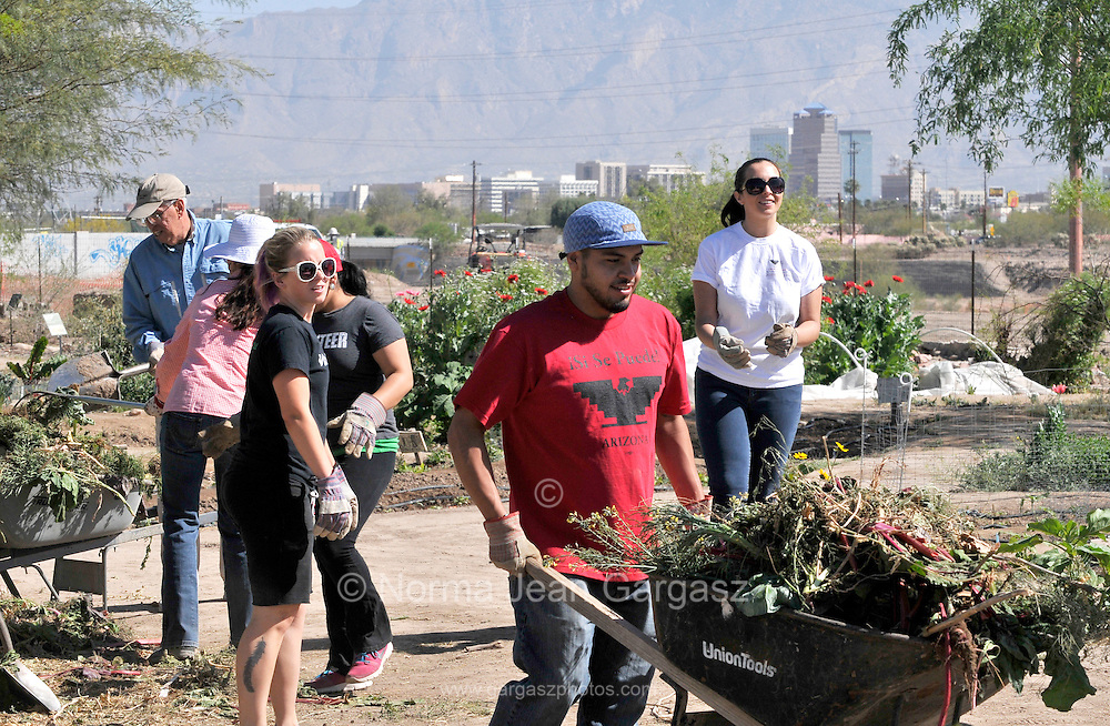 Participants from City High School and the Community Food Bank of Southern Arizona gather to work in the fields that produce food for needy families in a Chávez Day of Service at Las Milpitas de Cottonwood Community Farm in Tucson, Arizona, USA.  Earlier this month the city council approved Chávez' birthday as an official paid holiday. The holiday goes into effect next year.  Chavez fought for rights for farm workers and co-founded the United Farm Workers Association, which later became the United Farm Workers.