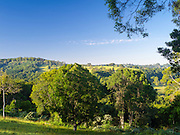 Morning in the Wilson River Valley, near Federal, New South Wales, Australia.