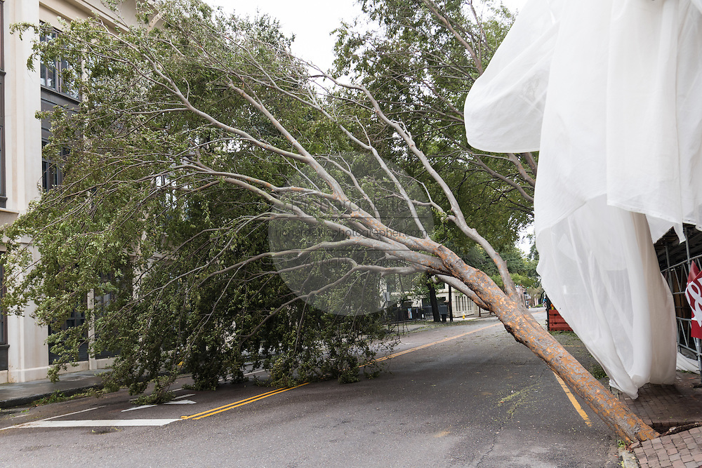 A downed tree blocks Meeting Street in historic downtown after Hurricane Matthew passed through causing flooding and light damage to the area October 8, 2016 in Charleston, South Carolina. The hurricane made landfall near Charleston as a Category 2 storm but quickly diminished as it moved north.