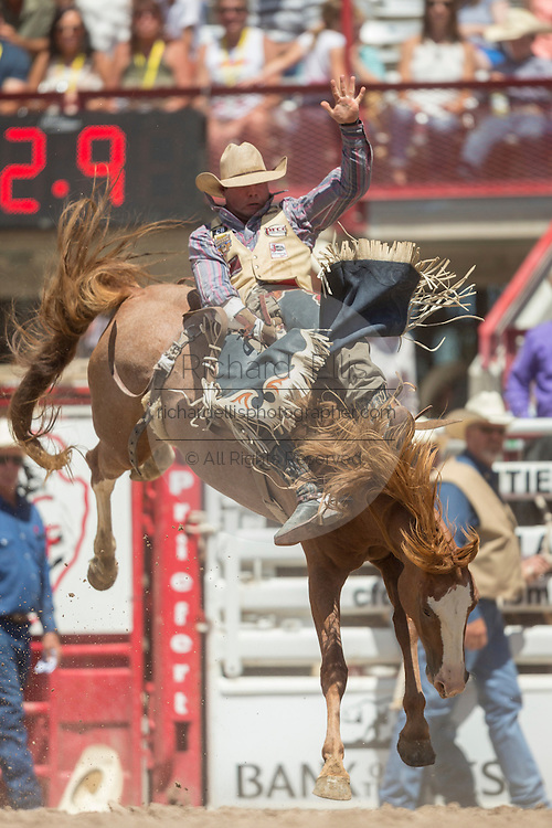 Bareback rider Colt Kataif hangs on to Mud Hook at the Cheyenne Frontier Days rodeo at Frontier Park Arena July 24, 2015 in Cheyenne, Wyoming. Frontier Days celebrates the cowboy traditions of the west with a rodeo, parade and fair.