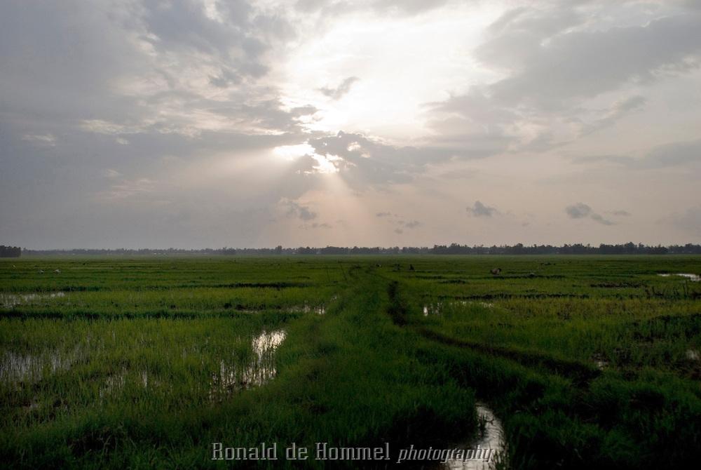 Repiquage dans les rizières près de Wereta, à l'est du lac Tana. Le riz a été introduit en 1978 en Ethiopie par les Nord-Coréens. Les zones inondées désertées par le passé commencent petit à petit à se repeupler. On compte aujourd'hui des centaines d'hectares de rizières. Wereta, est un « nouveau » village de cultivateurs nommé par la.variété de riz nord-coréen qui a relancé l'économie locale.