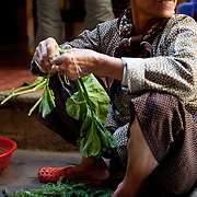 Woman trimming pumpkin leaves in Hanoi, Vietnam.