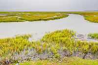 A view of the salt marsh from Village Creek Landing on St. Simons Island.