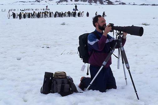 Wildlife Photography, Photographing King Penguins on South Georgia Island.  Antartica.