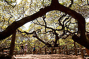 Parnamirim_RN, Brasil...Maior Cajueiro do Mundo na praia de Piranji do Norte em Parnamirim, Rio Grande do Norte...The largest cashew tree in the world in Piranji beach in Parnamirim, Rio Grande do Norte...Foto: LEO DRUMOND / NITRO