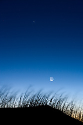 Moon and stars above grasses on dune, Monahans Sandhills State Park, Texas, USA.