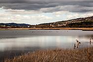 Oasi Pantano di Pignola, Basilicata, Italia, 27/02/2016<br /> Il Lago Grande dell'oasi del WWF Pantano di Pignola, a pochi chilometri da Potenza, in Basilicata.<br /> <br /> Oasis Pantano Lake in Pignola, Basilicata, Italy, 27/02/2016<br /> The Great Lake, in the Pantano Lake in Pignola WWF Oasis, few kilometers far from Potenza, in Basilicata.