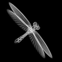 X-ray image of a dragonfly (white on black) by Jim Wehtje, specialist in x-ray art and design images.