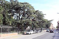 20121017 CEDRI DEL LIBANO PARCO MASSARI