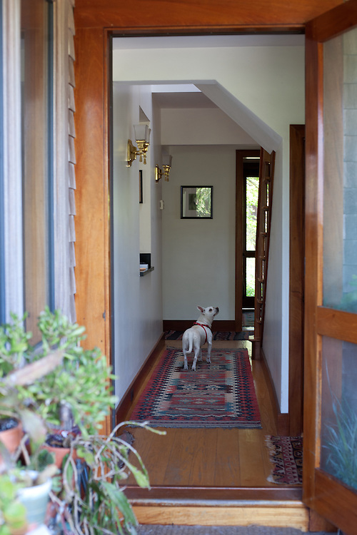 Penny the Dog, Looking for Someone up the stairs, Nantucket, Massachusetts, 2013