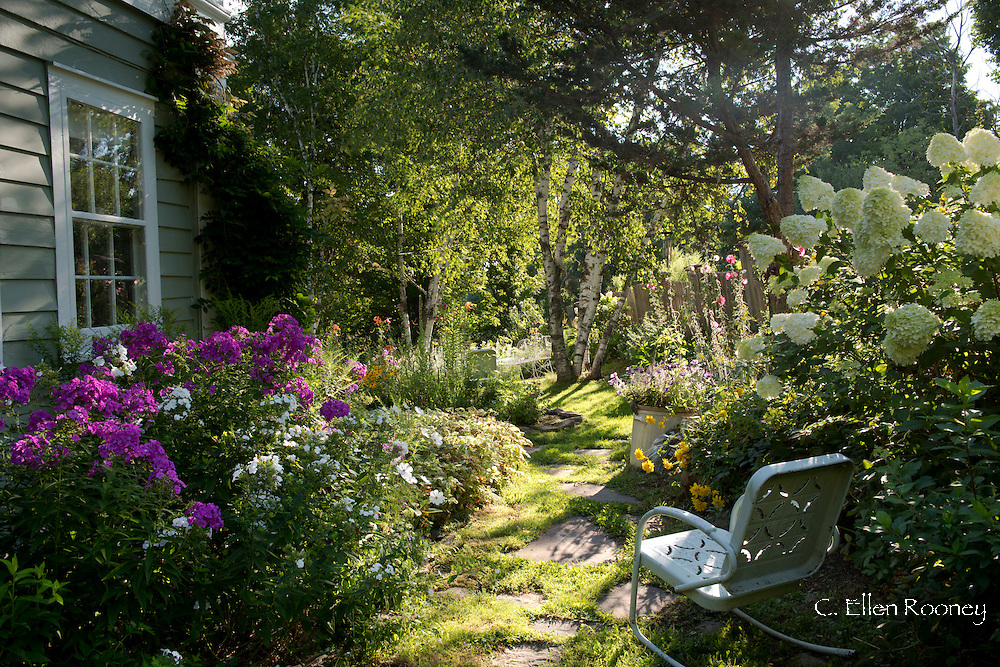 Artist Katherine Bowlings cottage garden of phlox, cosmos and hydrangea in Potter Hollow, New York State, U.S.A.