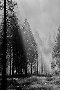 The sun's rays filter through the smoke in a Yosemite National Park image showing a prescribed burn.