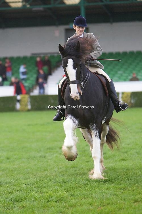 Jane Kirk and Gairloch Challenger<br /> 7year old Bay Gelding Shire Horse<br /> Winner Ridden Heavy Horse Class