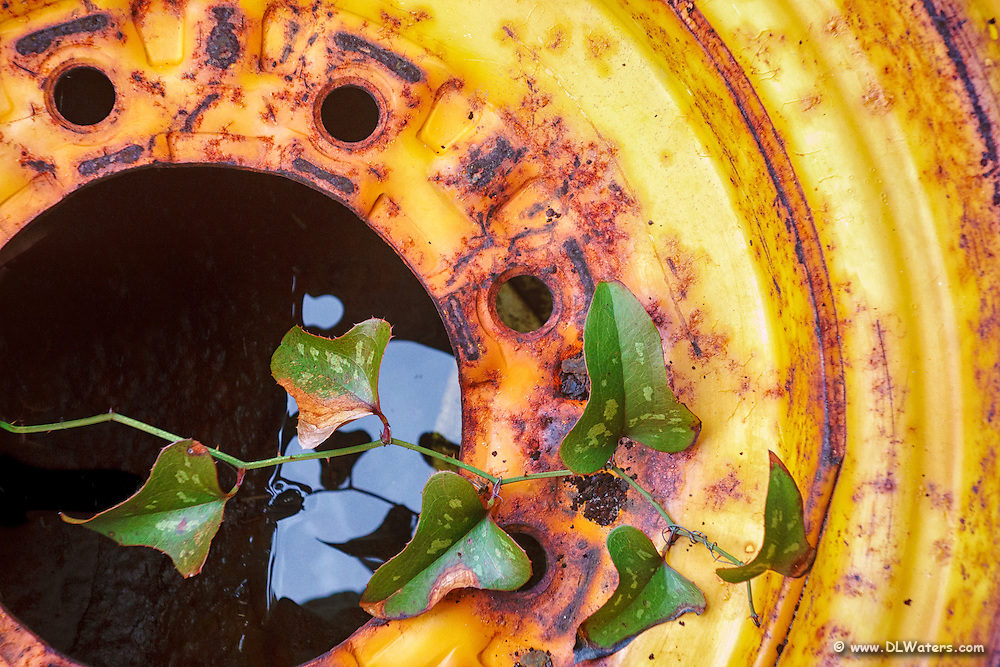 Rusty yellow wheel with a vine growing out of the center.