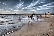 Dogs Playing on the Beach in Huntington Beach