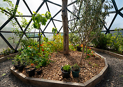 Plants and herbs in biosphere at  Dunnet Bay Distillery in Caithness on  the North Coast 500 scenic driving route in northern Scotland, UK