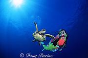 diver & juvenile green sea turtle, Chelonia mydas, Kua Bay, Kona, Hawaii ( the Big Island ), USA ( Central Pacific Ocean ) MR286