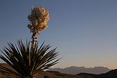 Texas Desert Flora Portfolio