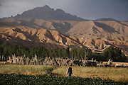 An Afghan boy is walking near Bamyian's archaeological site. The cliff where once stood the Western Buddha (55m - 'Male') is photographed after sunset in Bamiyan, Afghanistan, an area mostly populated by Hazaras. The Buddhas of Bamiyan were two 6th century monumental statues of standing Buddhas carved into the side of a cliff in the Bamiyan valley in the Hazarajat region of central Afghanistan, situated 230 km northwest of Kabul at an altitude of 2500 meters. The statues represented the classic blended style of Gandhara art. The main bodies were hewn directly from the sandstone cliffs, but details were modelled in mud mixed with straw, coated with stucco. Amid widespread international condemnation, the smaller statues (55 and 39 meters respectively) were intentionally dynamited and destroyed in 2001 by the Taliban because they believed them to be un-Islamic idols. Once a stopping point along the Silk Road between China and the Middle East, researchers think Bamiyan was the site of monasteries housing as many as 5,000 monks during its peak as a Buddhist centre in the 6th and 7th centuries. It is now a UNESCO Heritage Site since 2003. Archaeologists from various countries across the world have been engaged in preservation, general maintenance around the site and renovation. Professor Tarzi, a notable An Afghan-born archaeologist from France, and a teacher in Strasbourg University, has been searching for a legendary 300m Sleeping Buddha statue in various sites between the original standing ones, as documented in the old account of a renowned Chinese scholar, Xuanzang, visiting the area in the 7th century. Professor Tarzi worked on projects to restore the other Bamiyan Buddhas in the late 1970s and has spent most of his career researching the existence of the missing giant Buddha in the valley.