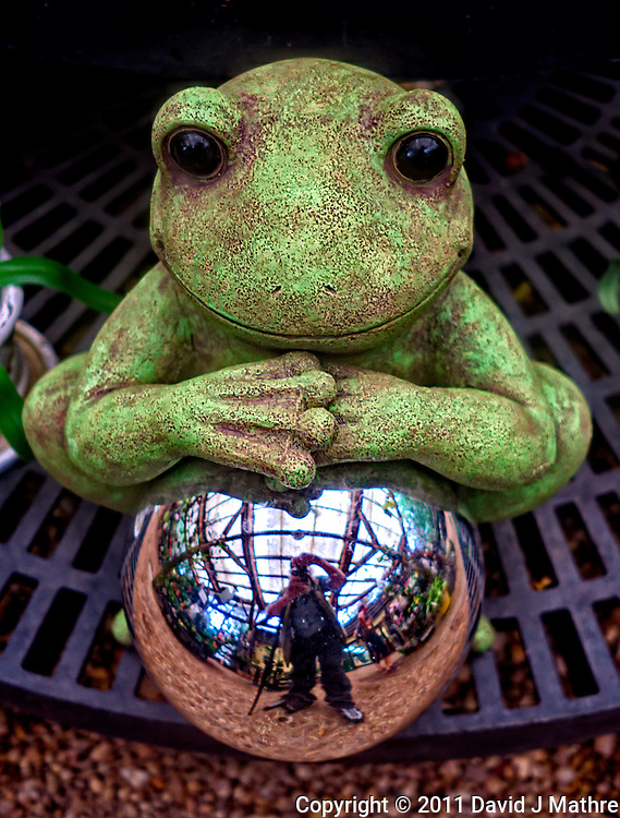 Frog & Mirror. Marie Selby Gardens Gift Shop - Sarasota, Florida. Image taken with a Leica X1 (ISO 100, 24 mm, f/2.8, 1/30 sec)