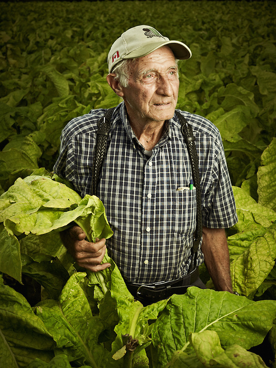 Elderly Gentalmen in his tobacco inspecting the harvest shot as a Environmental Portraiture on a PhaseOne.