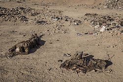 November 19, 2016 - Hammam Al-Alil, Nineveh Governorate, Iraq - Dead bodies from mass graves at Hammam al-Alil, Iraq. (Credit Image: © Berci Feher via ZUMA Wire)