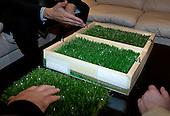 Luzhniki Grass