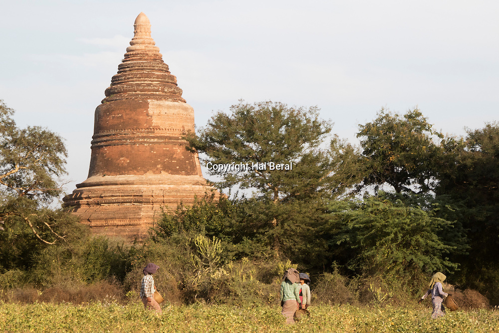 Stupa overlooks farmers working in a field in the Archeological Zone<br /> Bagan,Myanmar