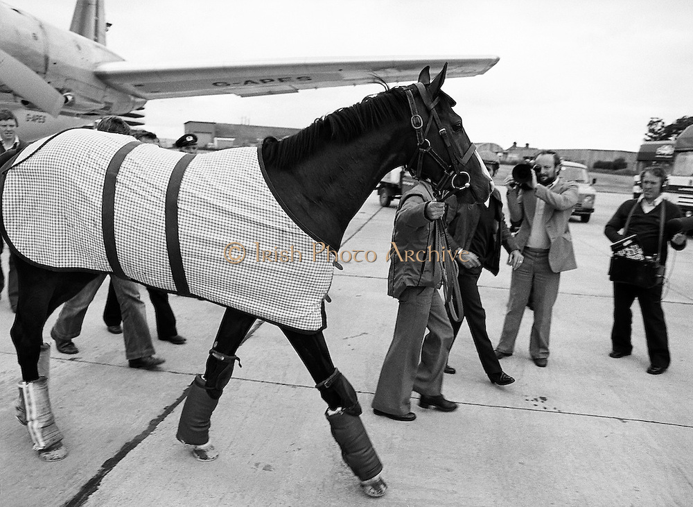 Equine superstar: the Aga Khan's horse, Shergar, arriving at Dublin Airport, en route to the Sweeps Derby at the Curragh, County Kildare.<br />