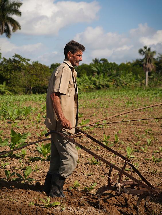 Tobacco farmer using old plow, Pinar del Rio, Cuba