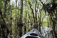 Swamp along Turner River in the Big Cypress National Preserve.
