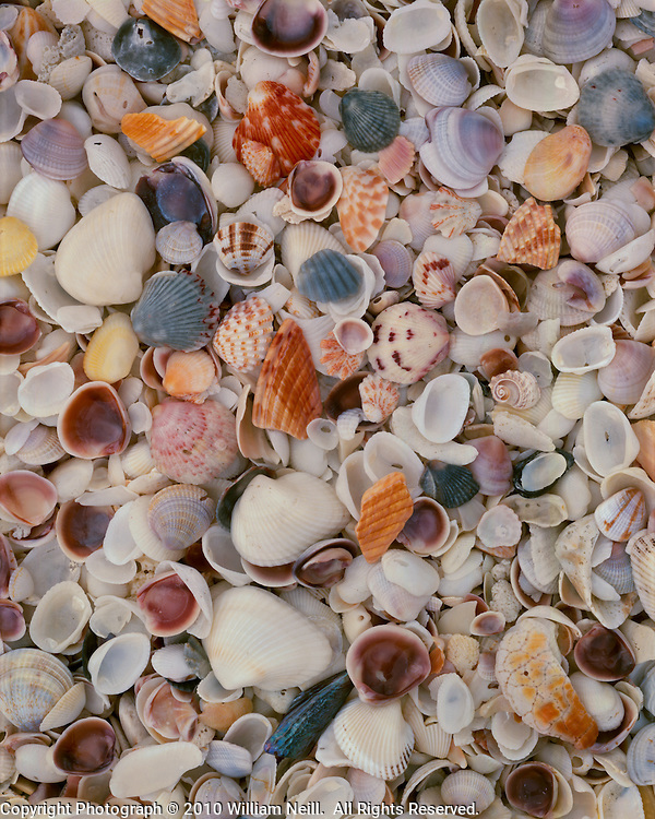 Shells, Bowman's Beach, Sanibel Island, Florida
