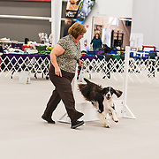 The photography was made during the 2015 Engliish Springer Spaniel Field Trial Association (ESSFTA) Rally Trial.  The event took place, Wednesday, September 20th, at Purina Farms, in Gray Summit, MO.