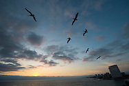 Pelicans fly overhead at sunset in Puerto Vallarta, Mexico from February 23, 2013.