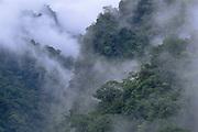 Rain Forest at Dawn<br />Pongo  de Mainique Canyon<br />Urubamba River<br />Amazon Rain Forest, PERU.  South America