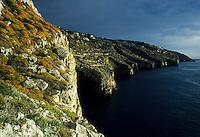 Limestone cliffs near Capo di Leuca with Euphorbia dendroides maquis