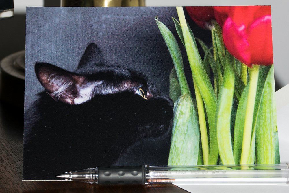 Greeting Card with Dinah Kitty checking out the tulips photo.