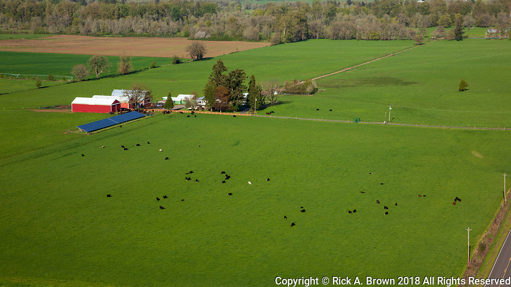 Cattle at a farm in the Willamette Valley from the air.