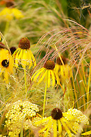 Tatton Flower Show. Echinacea yellow mellow with achillea terracotta and ornamental grass stipa